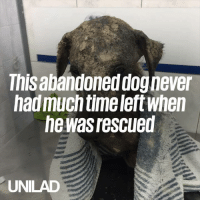 This abandoned dog had very little time left when he was rescued, but amazingly made a full recovery! 🙌❤️️: This abandoned dog never  hadmuch time left when  he was rescued  UNILAD This abandoned dog had very little time left when he was rescued, but amazingly made a full recovery! 🙌❤️️