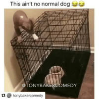 No jail can hold me! 😂😂😂 @ig_immortal HendrixBrown nochill picoftheday photooftheday instagram repost tb throwback hiphop mood instagood lol lmao funny laugh haha hilarious comedy instafunny bruh wow crazy transformationtuesday tuesday dog dogs doglife savage dope thuglife: This ain't no normal dog  @TONYBAKERCOMEDY  1 tonybakercomedy No jail can hold me! 😂😂😂 @ig_immortal HendrixBrown nochill picoftheday photooftheday instagram repost tb throwback hiphop mood instagood lol lmao funny laugh haha hilarious comedy instafunny bruh wow crazy transformationtuesday tuesday dog dogs doglife savage dope thuglife