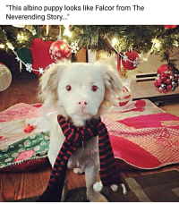 """Funny, Puppy, and Dragon: """"This albino puppy looks like Falcor from The  Neverending Story..."""" I is a dragon via /r/funny https://ift.tt/2EmUsMG"""