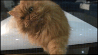 This angry cat: This angry cat