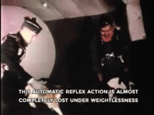 Actional: THIS AUTOMATIC REFLEX ACTION US ALMOST  COMPLETELY LOST UNDER WEIGHTLESSNESS