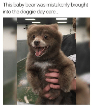 Little Bear Pupper: This baby bear was mistakenly brought  into the doggie day care. Little Bear Pupper