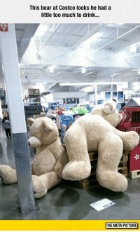 srsfunny:Costco Bear: This bear at Costco looks he hada  little too much to drink...  79.9  THE META PICTURE srsfunny:Costco Bear