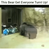 Funny, Lol, and Turn Up: This Bear Get Everyone Turnt Up! Aye turn up lol
