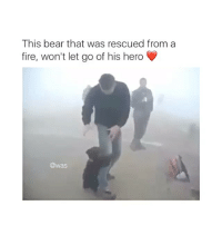 this is too cute!!-!-!-!-: This bear that was rescued from a  fire, won't let go of his hero  @was this is too cute!!-!-!-!-
