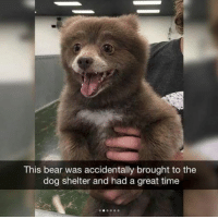 Bear, Time, and Dog: This bear was accidentally brought to the  dog shelter and had a great time