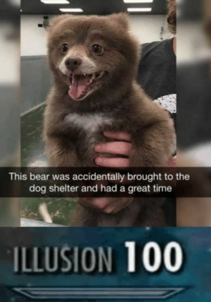 Bear, Time, and Dog: This bear was accidentally brought to the  dog shelter and had a great time  ILLUSION 100