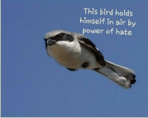 This bird: This bird holds  himself in air by  power of hate This bird