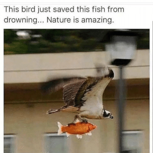 Birds, Fish, and Nature: This bird just saved this fish from  drowning... Nature is amazing birds are nice