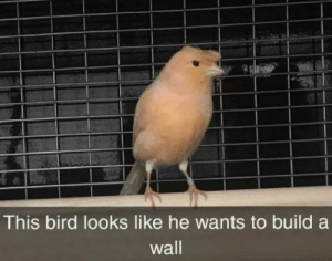 But he's not gonna pay for it: This bird looks like he wants to build  wall But he's not gonna pay for it