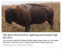 Alive, Ugly, and Gizmodo: This Bison Was Struck by Lightning and Emerged Ugly  But Alive  If you're ever in Neal Smith National Wildlife Refuge, keep an eye out for the ugliest  bison alive. That's not an insult. Taking a direct hit from a lightning bolt and...  GIZMODO.COMI BY ESTHER INGLIS-ARKELL