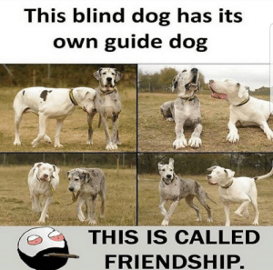 Friendship, Dog, and Guide: This blind dog has its  own guide dog  THIS IS CALLED  FRIENDSHIP.