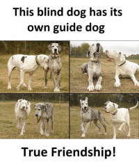 Twitter: BLB247 Snapchat : BELIKEBRO.COM belikebro sarcasm meme Follow @be.like.bro: This blind dog has its  own guide dog  True Friendship! Twitter: BLB247 Snapchat : BELIKEBRO.COM belikebro sarcasm meme Follow @be.like.bro