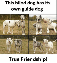 Amazing ❤️ Tag your True friend 😘: This blind dog has its  own guide dog  True Friendship! Amazing ❤️ Tag your True friend 😘