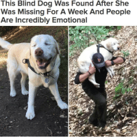 """Sage the dog was too weak to walk when her owner's neighbor found her while out for a hike 🙏🐶"" @buzzfeednews WSHH: This Blind Dog Was Found After She  Was Missing For A Week And People  Are Incredibly Emotional ""Sage the dog was too weak to walk when her owner's neighbor found her while out for a hike 🙏🐶"" @buzzfeednews WSHH"