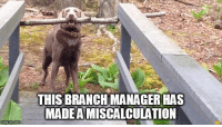 Here Is The Proof Dogs Are The Best Branch Managers Ever (Memes & Gifs): THIS BRANCHMANAGER HAS  MADEAMISCALCULATION  imgtip.com Here Is The Proof Dogs Are The Best Branch Managers Ever (Memes & Gifs)