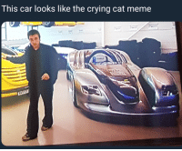 crying cat: This car looks like the crying cat meme
