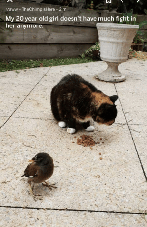 This cat and bird: This cat and bird