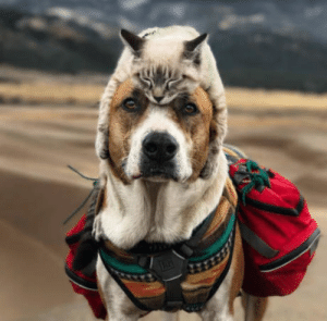 This Cat And Dog Love Travelling Together, And Their Pictures Are Absolutely Epic: This Cat And Dog Love Travelling Together, And Their Pictures Are Absolutely Epic