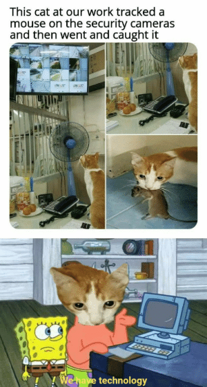 Advanced cat via /r/memes https://ift.tt/2KIHnk9: This cat at our work tracked a  mouse on the security cameras  and then went and caught it  50  3er  MEWAR  963  We have technology Advanced cat via /r/memes https://ift.tt/2KIHnk9