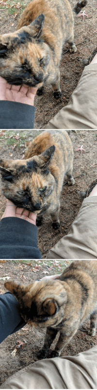 Chill, Girlfriend, and Cat: This cat followed my girlfriend and i to the oark and just decided to chill with us.