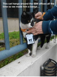 Memes, Office, and All the Time: This cat hangs around the IBM offices all the  time so we made him a badge... Got a Promotion