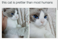 Cat, This, and Humans: this cat is prettier than most humans