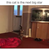 And now it's stuck in your head forever.: this cat is the next big star  FB: PAKALUPAPITOOFFICIAL And now it's stuck in your head forever.