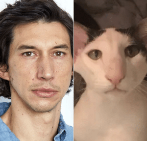 This cat looks a lot like Adam Driver: This cat looks a lot like Adam Driver