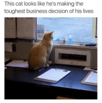@tank.sinatra is the funniest original meme account on Instagram hands down: This cat looks like he's making the  toughest business decision of his lives @tank.sinatra is the funniest original meme account on Instagram hands down