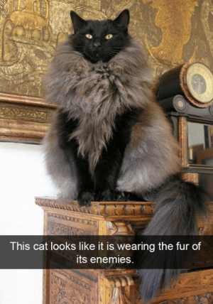 Th E: This cat looks like it is wearing th  e fur of  ts enemies