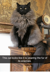 Memes, Enemies, and 🤖: This cat looks like it is wearing the fur of  its enemies