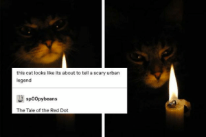 Definitely, Saw, and Tumblr: this cat looks like its about to tell a scary urban  legend  sp0Opybeans  The Tale of the Red Dot 15 Great Tumblr Posts I Saw This Week When I Definitely Should Have Been Working