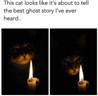 Heardly: This cat looks like it's about to tell  the best ghost story I've ever  heard