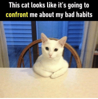 Hooman, only me can help you. Follow @9gag for more cute memes. 9gag cat hooman problems: This cat looks like it's going ta  confront me about my bad habits Hooman, only me can help you. Follow @9gag for more cute memes. 9gag cat hooman problems