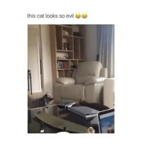 Memes, Evil, and 🤖: this cat looks so evil follow me (@hangars) for more! 💕