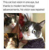 This cat lost vision in one eye, but  thanks to modern technology  advancements, his vision was repaired Modern Technology 👍