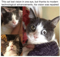 Science is amazing @animalsdoingthings: This cat lost vision in one eye, but thanks to modern  technological advancements, his vision was repaired Science is amazing @animalsdoingthings