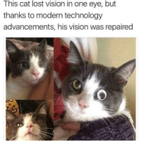 Jesus, Lost, and Vision: This cat lost vision in one eye, but  thanks to modern technology  advancements, his vision was repaired Praise Jesus