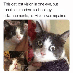 👏🏾👏🏾👏🏾: This cat lost vision in one eye, but  thanks to modern technology  advancements, his vision was repaired 👏🏾👏🏾👏🏾