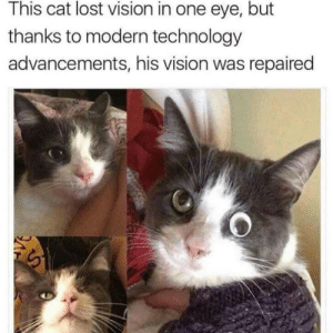 lol: This cat lost vision in one eye, but  thanks to modern technology  advancements, his vision was repaired lol