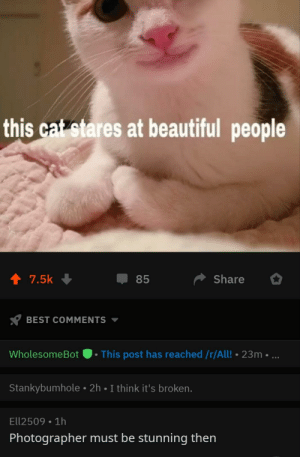 2meirl4meirl: this cat stares at beautiful people  4 7.5k  85  Share  BEST COMMENTS  WholesomeBot .This post has reached /r/All! 23m  Stankybumhole 2h I think it's broken.  Ell2509 1h  Photographer must be stunning then 2meirl4meirl