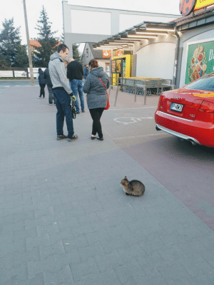 This cat waiting in line at the supermarket in Poland... Social Distance Cat: This cat waiting in line at the supermarket in Poland... Social Distance Cat
