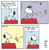 With the new swipe feature on instagram, I can finally post longer Sunday strips! snoopy comics cartoon snoopycomics woodstock: THIS CAT WAS ABOUT  THREE FEET TALL, SEE  AND HE.  OSNOOPY COMICS  ANYWAY, THIS CAT  HAD BEEN.  SWIPE  MORE With the new swipe feature on instagram, I can finally post longer Sunday strips! snoopy comics cartoon snoopycomics woodstock