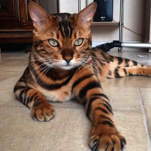 Beautiful, Cat, and Fur: This cat with a beautiful fur