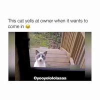 Funny, Cat, and This: This cat yells at owner when it wants to  Come in  oyooyolololaaaa THE SUBTITLE HAHAHA