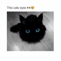 Cats, Olive Garden, and Girl Memes: This cats eyes  e e @ Olive Garden