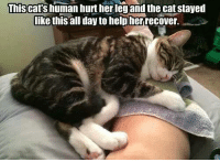 Memes, Help, and Leggings: This cats human hurt her leg and the cat stayed  like this all day to help her recover.