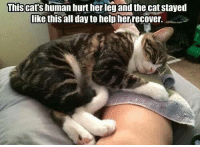 Grumpy Cat, Leggings, and Helping: This Cats human hurt her leg and the cat stayed  like this all day to help her recover.