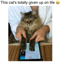Cats, Life, and Memes: This cat's totally given up on life  i79 That face kills me 😂 Credit: @slonsiberian